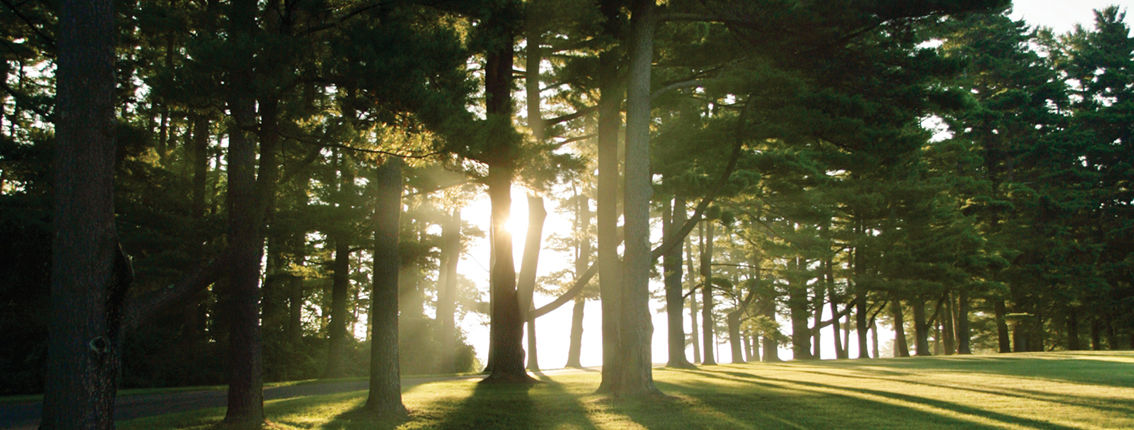 NetVUE sunburst trees photo